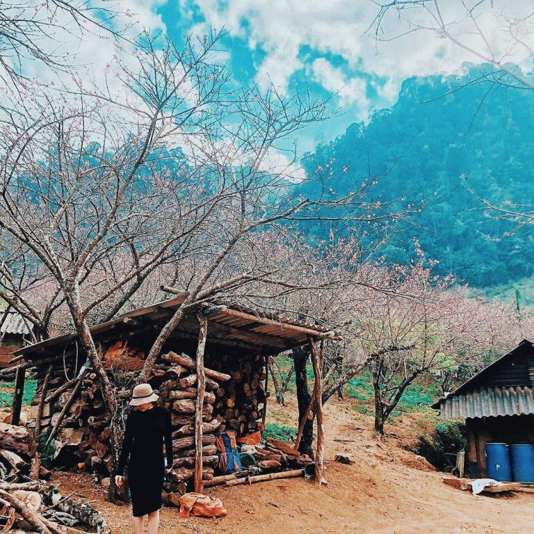thiên nhiên Mộc Châu - Sơn La